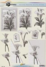 3D Etappen-Bogen-Trauer/Kondolenz-Cala mit Hintergrund-11055-328