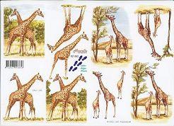 3D Etappen-Bogen- Giraffen-821580